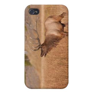 Alces de Bull iPhone 4/4S Carcasas