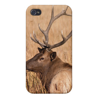 Alces de Bull iPhone 4 Coberturas