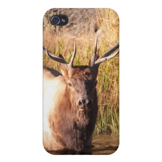 Alces de Bull iPhone 4/4S Funda