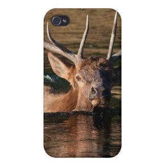Alces de Bull iPhone 4 Funda