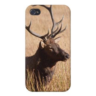 Alces de Bull iPhone 4 Cárcasas