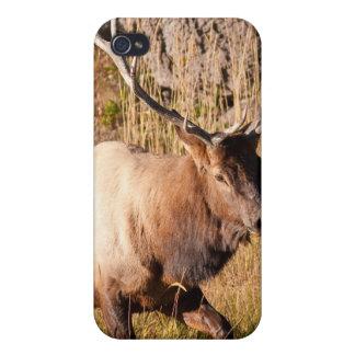 Alces de Bull iPhone 4 Cárcasa
