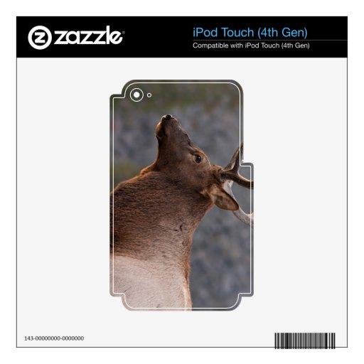 Alces de Bull iPod Touch 4G Skin