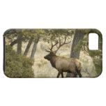 Alces de Bull, parque nacional de Yellowstone, iPhone 5 Fundas