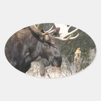 Alces de Bull Pegatinas De Ovaladas