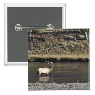 Alces de Bull que cruzan el río de Madison, Yellow Pin
