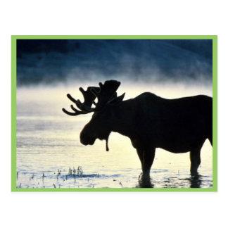 Alces de Bull Postales