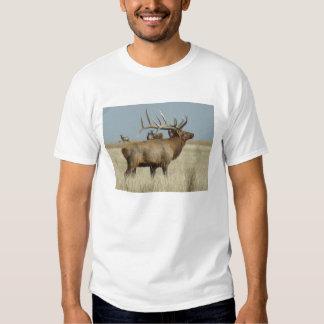Alces de E0004 Bull Camisas