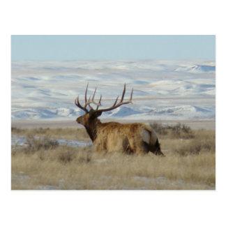 Alces de E0022 Bull Tarjetas Postales