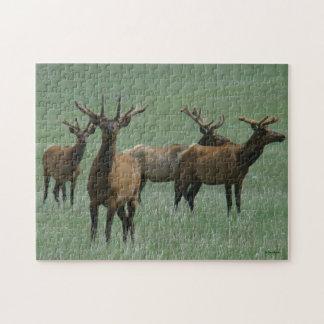 Alces de E0033 Bull Puzzle Con Fotos