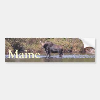 Alces de la vaca de Maine Pegatina Para Auto
