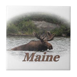 Alces de Maine Bull Azulejos