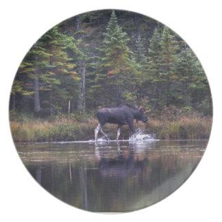 Alces de Maine Bull Plato Para Fiesta