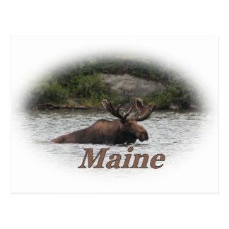 Alces de Maine Bull Postal