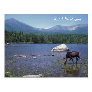 Alces de Maine de la región de Katahdin Tarjeta Postal