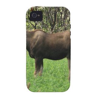 Alces de Montana Vibe iPhone 4 Carcasa