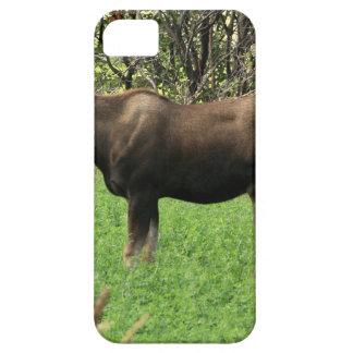 Alces de Montana iPhone 5 Cárcasa