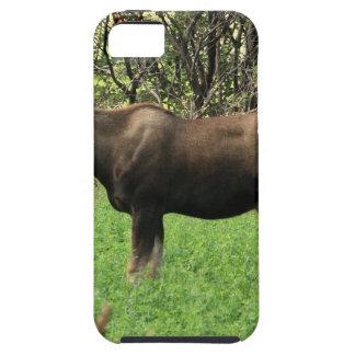 Alces de Montana iPhone 5 Coberturas