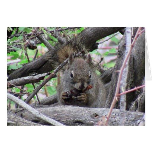 Alces de Pronghorn de los ciervos de los mamíferos Tarjeta De Felicitación
