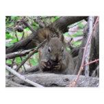 Alces de Pronghorn de los ciervos de los mamíferos Postal