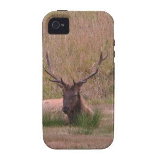 Alces de Roosevelt Bull iPhone 4/4S Carcasas