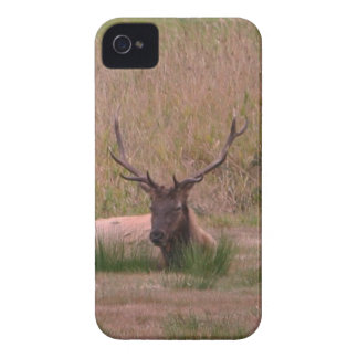 Alces de Roosevelt Bull Case-Mate iPhone 4 Coberturas