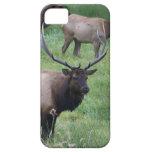 Alces de Roosevelt en Oregon iPhone 5 Case-Mate Protectores
