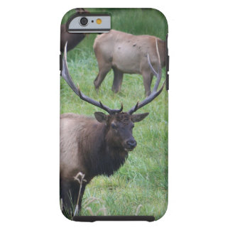 Alces de Roosevelt en Oregon Funda De iPhone 6 Tough