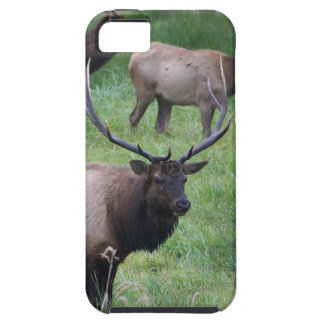 Alces de Roosevelt en Oregon iPhone 5 Case-Mate Funda