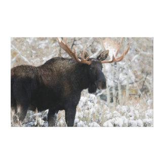 Alces de Shiras Bull, nieve 1 del otoño Impresion De Lienzo