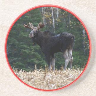 Alces de un año de Maine Bull Posavasos Diseño