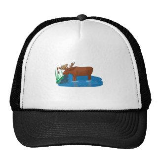 Alces en el flojo gorras