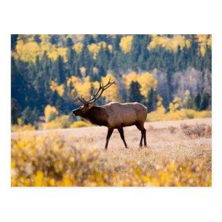 Alces en el Parque Nacional de las Montañas Postales