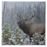 Alces en la llamada de la nieve, bugling, Yellowst Azulejo Cuadrado Grande
