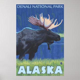 Alces en la noche - parque nacional de Denali, Ala Posters