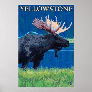 Alces en la noche - parque nacional de Yellowstone Impresiones