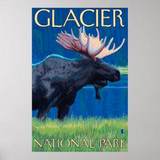 Alces en la noche - Parque Nacional Glacier TA Impresiones