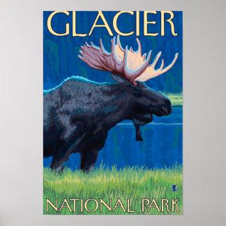 Alces en la noche - Parque Nacional Glacier, TA Póster