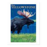 Alces en la noche - Yellowstone del oeste, Montana Postal