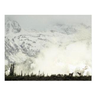 Alces en la postal magnífica de Teton