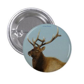 Alces jovenes de E0042 Bull Pin