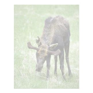 Alces jovenes que comen la hierba plantilla de membrete