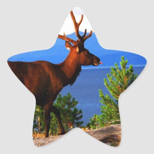 Alces por el lago Yellowstone Pegatina En Forma De Estrella