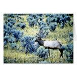 Alces primeros de Bull - parque nacional de Yellow Tarjetón