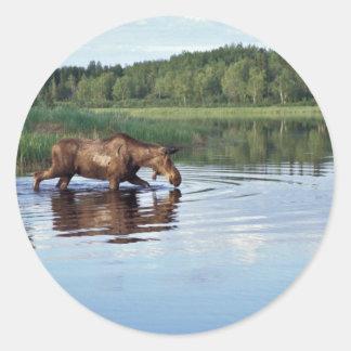 Alces que alimentan en el lago pegatina redonda