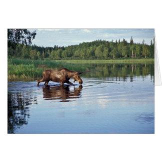Alces que alimentan en el lago tarjeta de felicitación