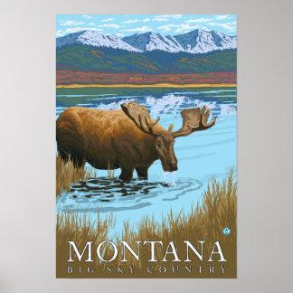 Alces que beben en el lago - Montana Poster