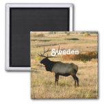 Alces suecos iman para frigorífico