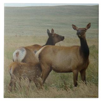 Alces y becerro de la vaca E0061 Azulejo Cuadrado Grande