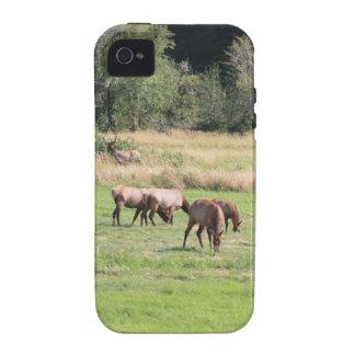 Alces y Harem de Bull Case-Mate iPhone 4 Carcasas